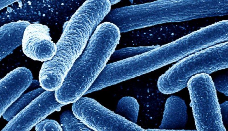 klasifikasi makhluk hidup bakteri