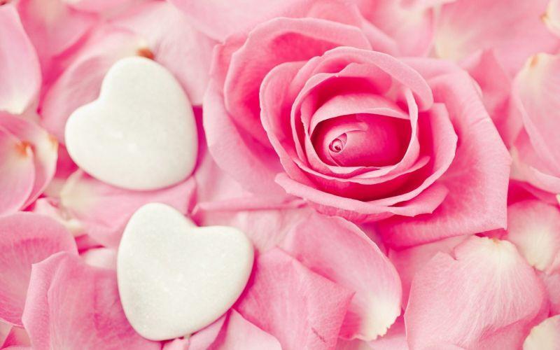 Background bunga Pink Lucu