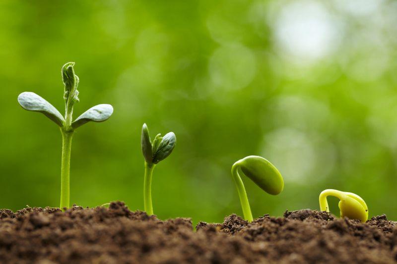 Tumbuhan atau tanaman
