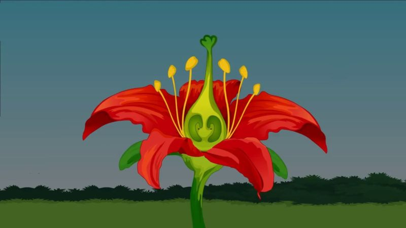 9 bagian bagian bunga beserta fungsi dan gambarnya lengkap bagian bagian bunga ccuart Gallery